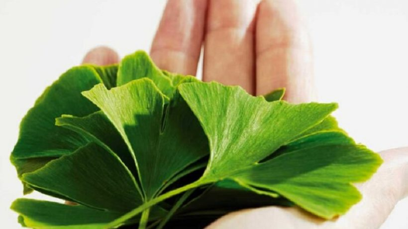 Ginkgo Biloba health benefits and properties